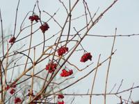 Winter am Darss 2