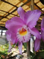 Orchideen Garten Funchal Madeira