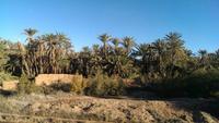 Zurück nach Marrakesch