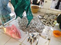 007 auf dem Fischmarkt in Barka