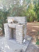 Die tierischen Bewohner haben Durst - Epidaurus