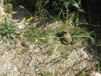 Schildkröten in Philippi