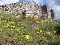 Herbstgoldbecher blühten in Dodona