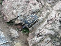 Auf der Akropolis in Athen lief uns eine Schildkröte über den Weg