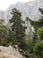 124 Samaria-Schlucht