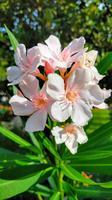 202 Rab, Blütenpracht im Stadtpark