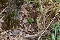 NP Plitvicer Seen