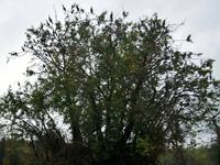 Kopacki Rit, Naturpark