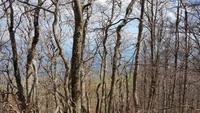 an der Ostseite des Berges Ucka lässt der Frühling noch auf sich warten