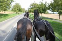 Kutschfahrt zur Farm