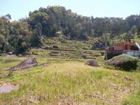 Reisterrassen bei Batutimongo