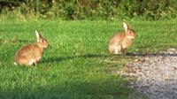 ...und Kaninchen