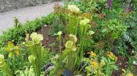 Blarney Pflanzen