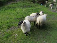 Brandon Sheep Farm
