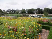Walled Garden im Phoenix Park Dublin