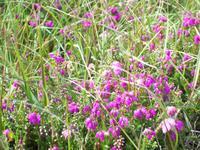 Blüten in kleinsten Erdspalten