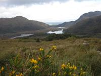 Blick von Ladies View Richtung Killarney