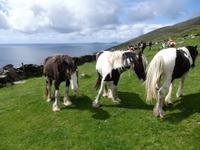 Auch Pferde stehen auf den Wiesen