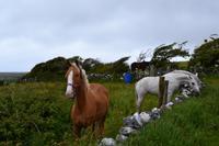 Wanderung im Burren