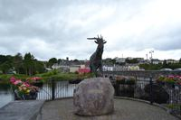 Killorglin - King Puck