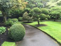Besuch des Nationalgestüts in Kildare