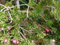 0621_Ein Gedi; botanischer Garten