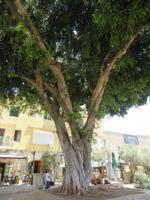 Rundreise Israel - Nazareth