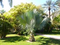 5.Tag, 28.10.2013: Botanischer Garten im Kibbuz