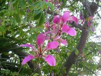 Botanischer Garten im Kibbuz En Gedi