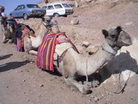 Sinai - ... am Katharinenkloster ...