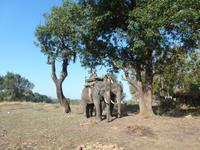 Elefanten in Kanha