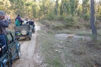 Eberhardt Gäste und der Tiger im Kanha Nationalpark