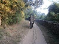 Eberhardt TRAVEL Reise durch Indien - Bandhavgarh Nationalpark