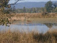 Eberhardt TRAVEL Reise durch Indien -  Kanha Nationalpark