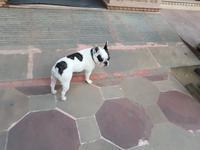 Indien, Jaipur, Hotel Alisar Haveli, Stella Hotel Hund