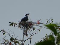 Indien, Kerala, Vogelpark