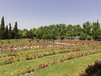Eram Garten in Shiraz