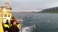 Walbeobachtung Hauganes - Dalvik - Rundreise Reisekombination Island und Grönland