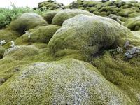 Lavafeld Island