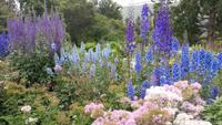 botanischer Garten in Akureyri