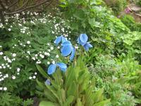 Im Garten von 'Petra's Steinhaus'