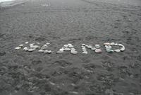am schwarzen Strand