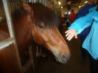 Auf dem Pferdehof