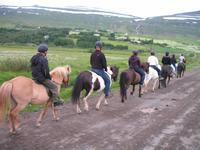 Pferdeausflug in Akureyri