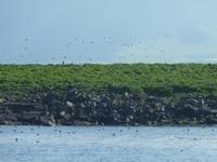 Papageientaucher-Insel
