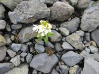 etwas Grünes (die Natur hinkt 3-4 Wochen zurück)
