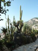 Mit hoch erhobenem Zeigefinger weist uns dieser Kaktus hier auf seine Existenz hin.