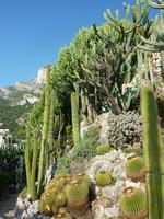 Unten wieder einige von Francas Lieblingspflanzen, oben ein dichter Wald aus Kakteenstämmen.