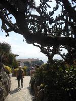 Exot_Garten_Monaco_2