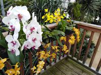13.09.2018 Raffeiner Orchideenwelt